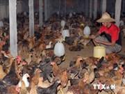 Nation on high alert for avian influenza A/H5N8