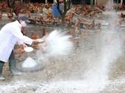 Quang Ngai destroys 12,000 A/H5N6 infected quails
