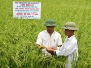 Efficient rice farming to curb emissions