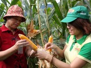 Vietnam to approve genetically modified crops
