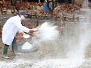 No new flu strains in Vietnam: health ministry