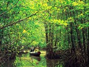Project on Mekong Delta's mangrove forest protection continues