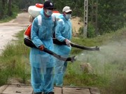 Localities asked to brace for dengue, hand-foot-and-mouth diseases