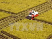Ministry seeks to develop Vietnam's rice brand name