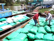 Capital, tax crunch restricts rice, seafood export