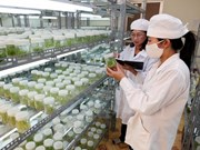 Vietnam, Japan discuss hi-tech agriculture, environmentally-friendly technology