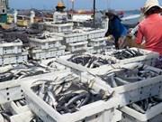 Fishermen see high yields in north season