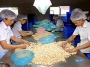 Cashew export value up 15.42 percent in Q1