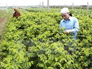 Fresh vegetable production plant to be built in Ha Nam