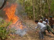 14 provinces vulnerable to forest fires