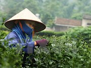 Seminar discusses ways to promote Thai Nguyen tea brands