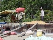 Rice stockpiling scheme in Mekong Delta nears completion