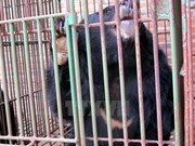 Deadline set for transfer of captive bears