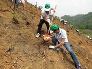 Tree planting project takes root in Bac Kan