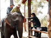 Vietnam's elephants on brink of extinction