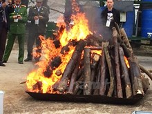 Vietnam destroys trafficked elephant tusks, rhino horns
