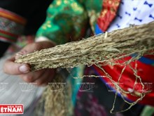 Flax weaving by Mong ethnics in Dong Van Karst Plateau