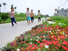 Flowers blossom along countryside roads in Nam Dinh