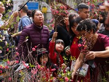 Hang Luoc flower market busy ahead of Tet festival