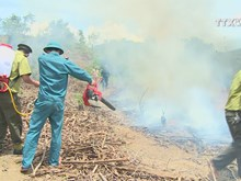 Da Nang forest fire service on high alert due to heat wave