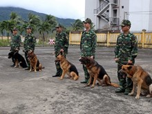 Police dogs in Da Nang city