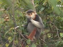 Journalists capture precious moments of primates