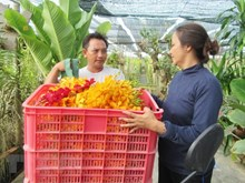 Ho Chi Minh City expands orchid planting areas