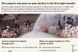 Rice exports see sharp drop in eight months