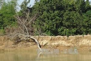 Khanh Hoa: More than 25 million USD for flooding, erosion prevention