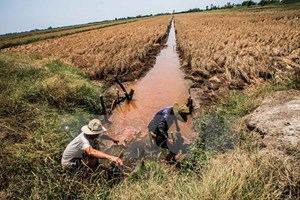 Conference to talk Mekong Delta sustainable development model