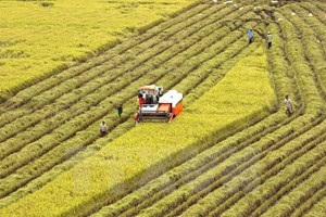 Vietnam acts to ensure food security amidst climate change