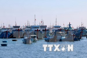 Over 426,000 USD to support offshore fishing in Thua Thien-Hue