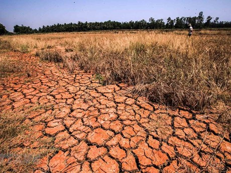 European countries implement climate change projects in Mekong Delta