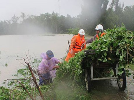 Quang Nam Red Cross raises funds for social security