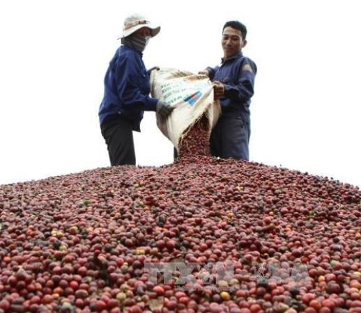 export of coffee in vietnam The ban had put the pepper and instant coffee exporters in india in a fix both resort to large imports from vietnam, which is the cheapest source, for value addition and re-export the report said that vpa had taken up the matter with ministry of agriculture and rural development of the country.